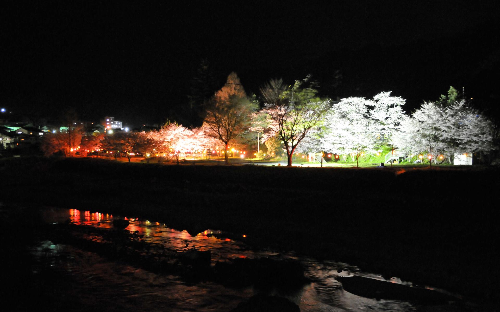 下分夜桜 3月
