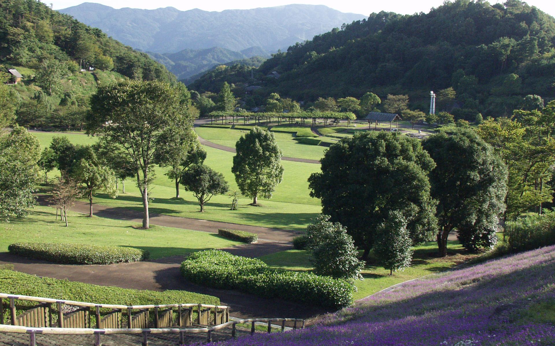 神山森林公園芝生 5月