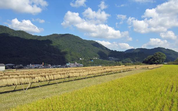 田園風景 9月