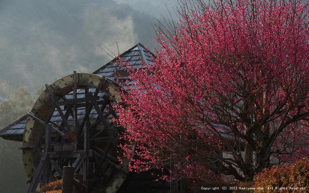 朝日に輝く(神山温泉)【フォトコンテスト2012】2月