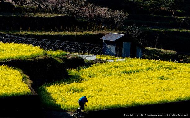 春を撮る(江田)【フォトコンテスト2012】3月