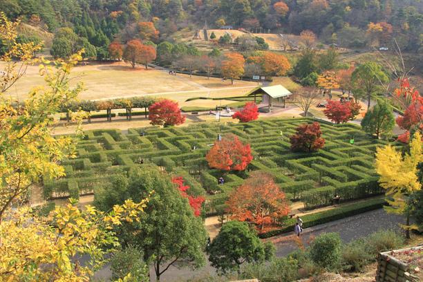 森林公園紅葉 10月