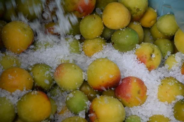 完熟梅で梅干し作り 6月